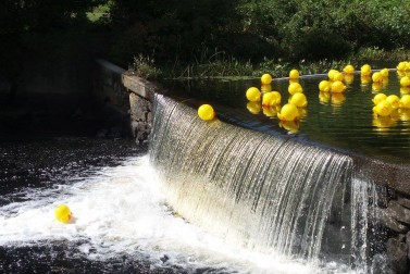 Auburn Day and 24th Annual Duck Race