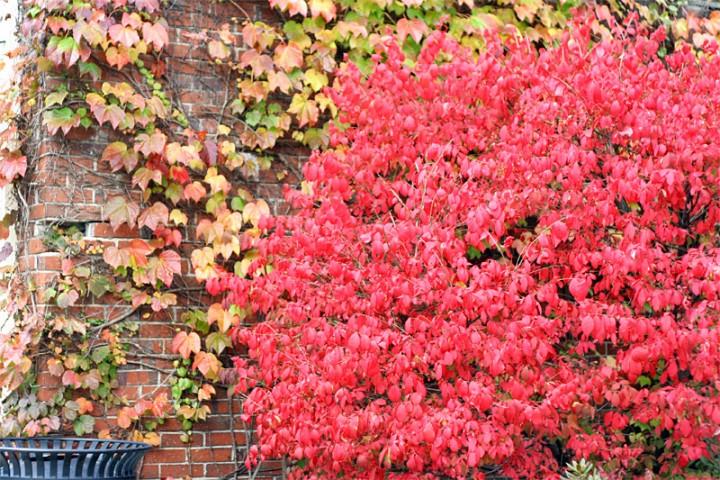 foliage-wall