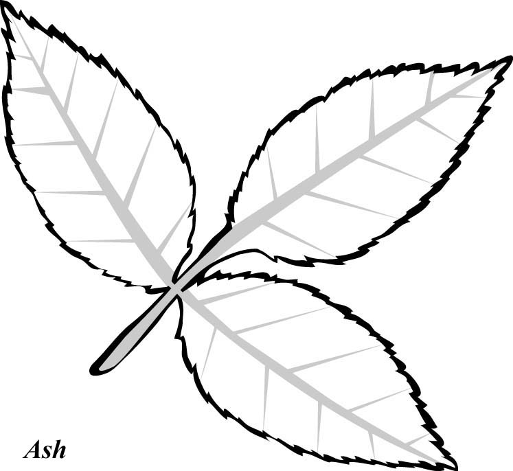 Print And Color These Leaves