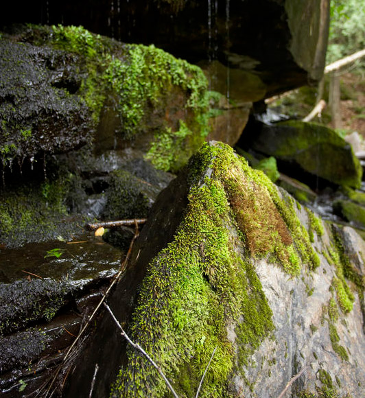 Gardening With Moss And Growing Moss