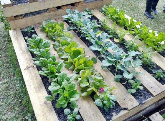 How To Make A Wood Pallet Garden New England Today