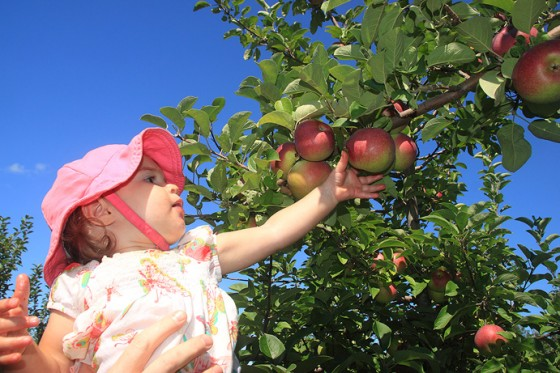 Annie Picking Apples