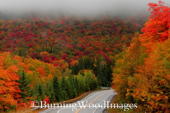 Dixville Notch by Michelle Brenholtz