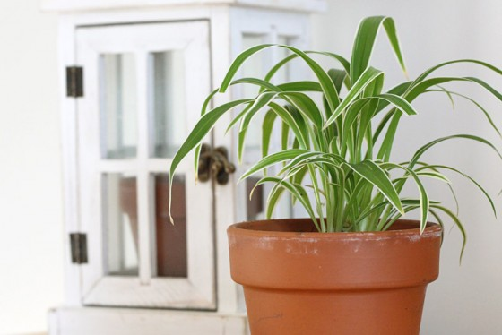 The 10 Best Low Light Houseplants New England Today