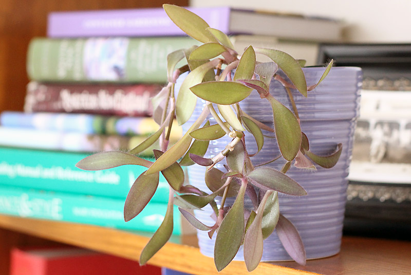 How to Repot Houseplants Transfer Plants into Larger Containers
