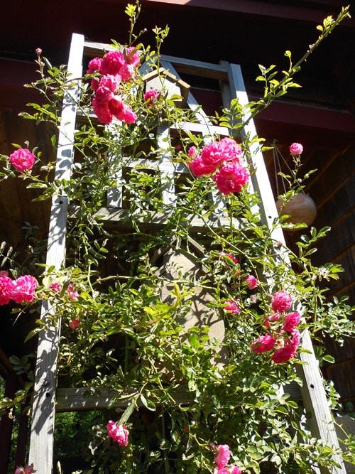 journal katy road pink rose