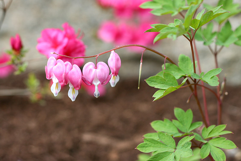 10 Best Shade Loving Plants Gardening Advice New England Today