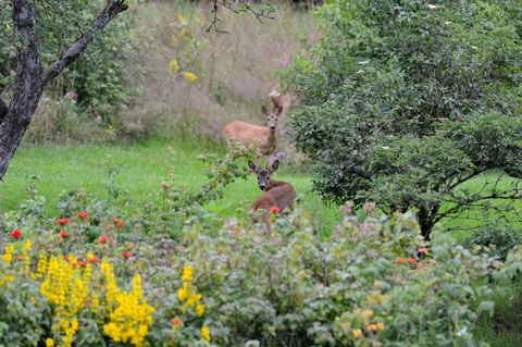 5 Ways To Keep Deer Out Of The Garden