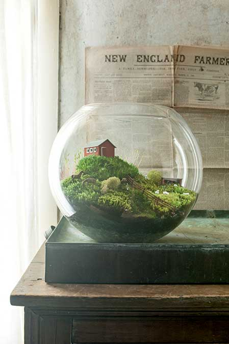 terrarium scenes new england under glass new england today. Black Bedroom Furniture Sets. Home Design Ideas