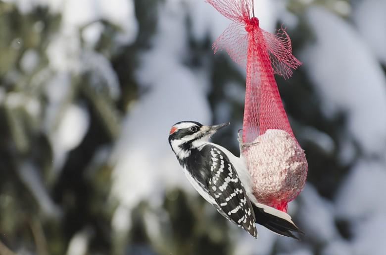 5 maneras simples de hacer los alimentadores del pájaro - Nueva Inglaterra hoy