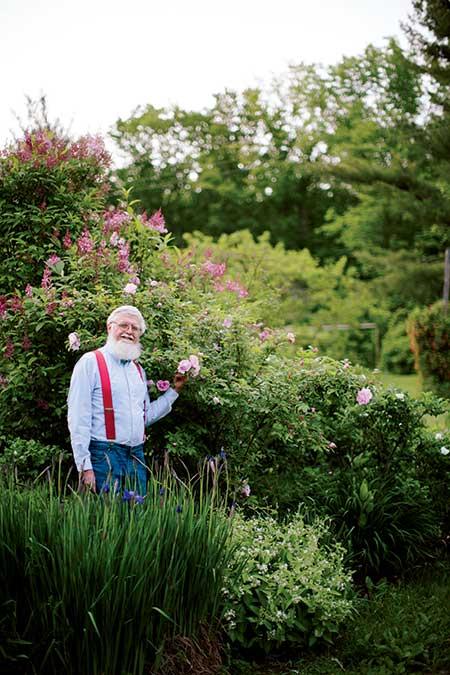 Roses In Garden: Winter-Hardy Varieties - New England Today