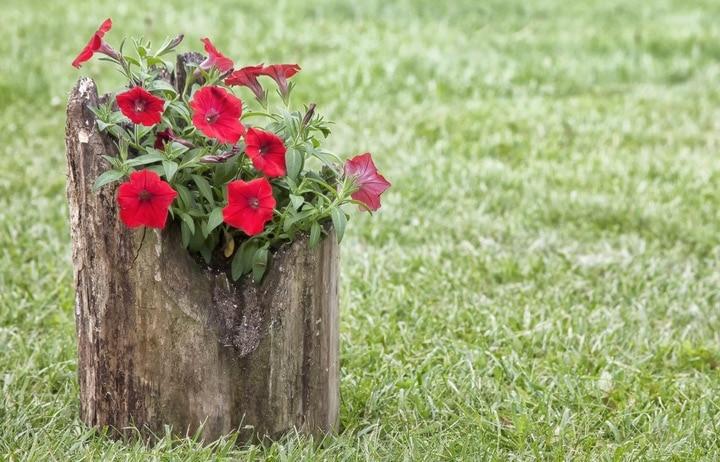 How to Make a Tree Stump Planter