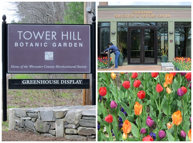 the colorful tulips attract lots of photographic attention alongside the entrance to the visitor center - Tower Hill Botanic Garden