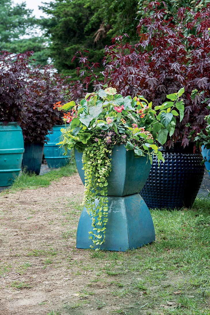 Container Gardens Flower Power New England Today