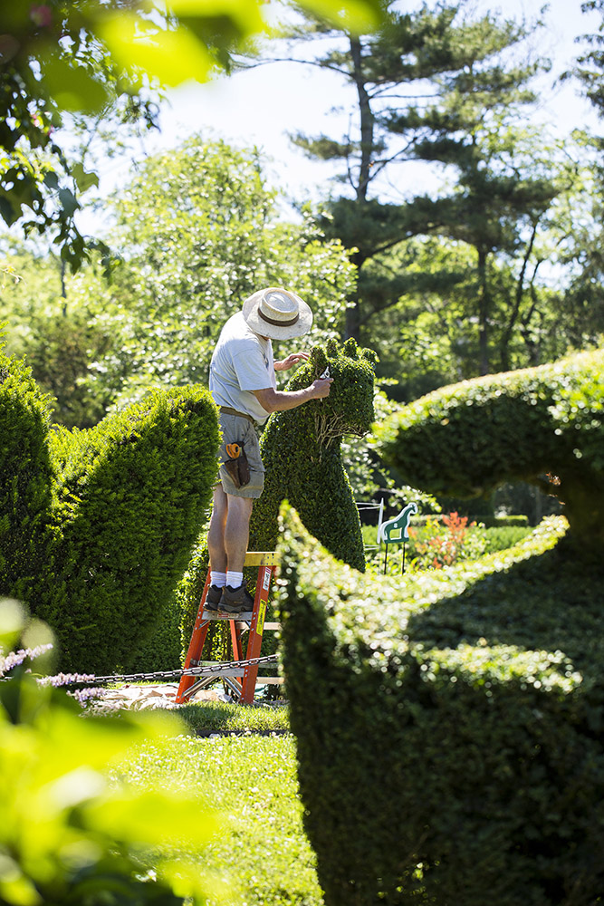 head gardener tk sculpts one of the many animals at Green Animals Topiary Garden in Newport.