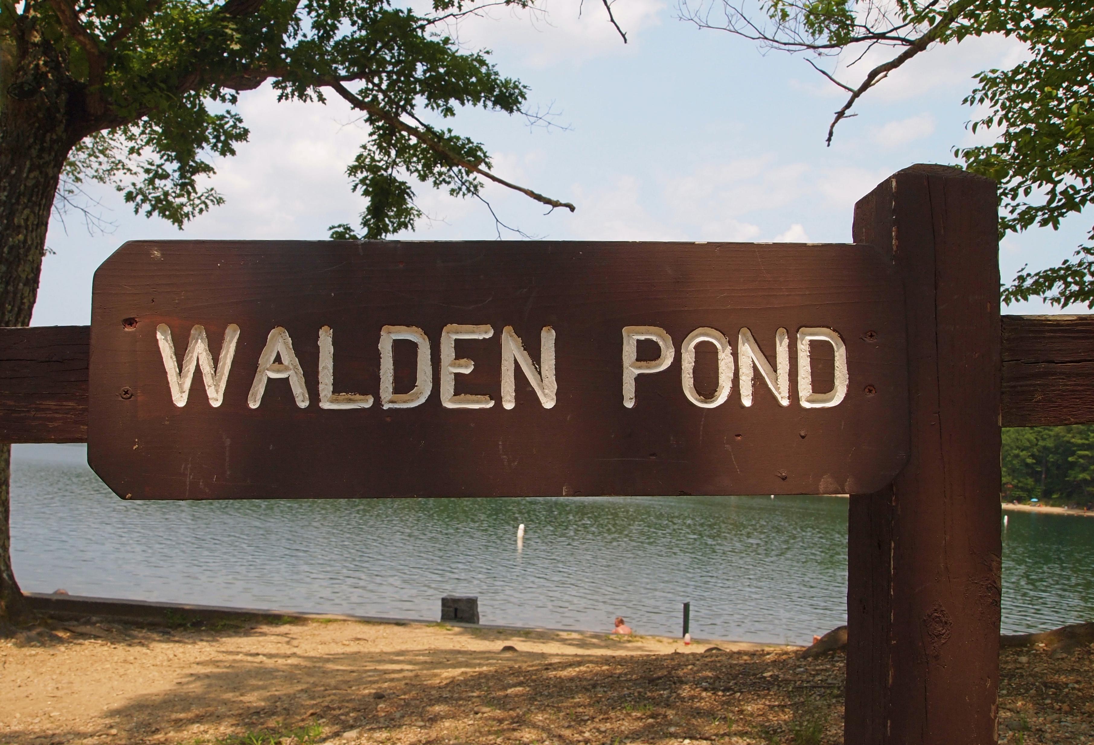 walden nature