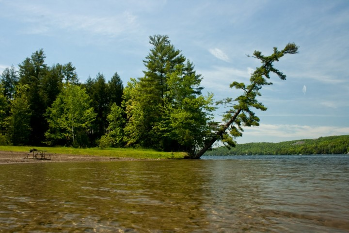 The famous leaning tree at Lake St. Catherine State Park