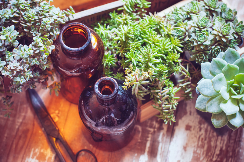 make an indoor succulent garden - Indoor Succulent Garden
