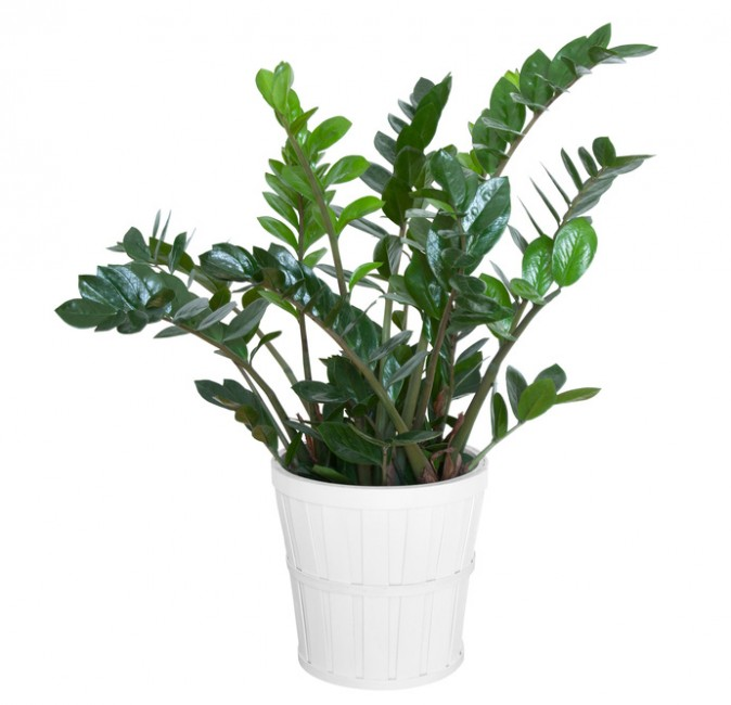 5 Hard To Kill Houseplants