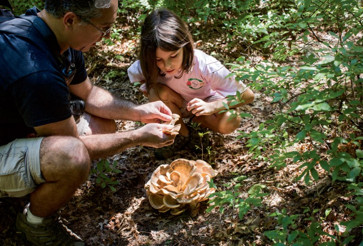 New England Wild Edibles | Secrets of the Spring Foragers - New