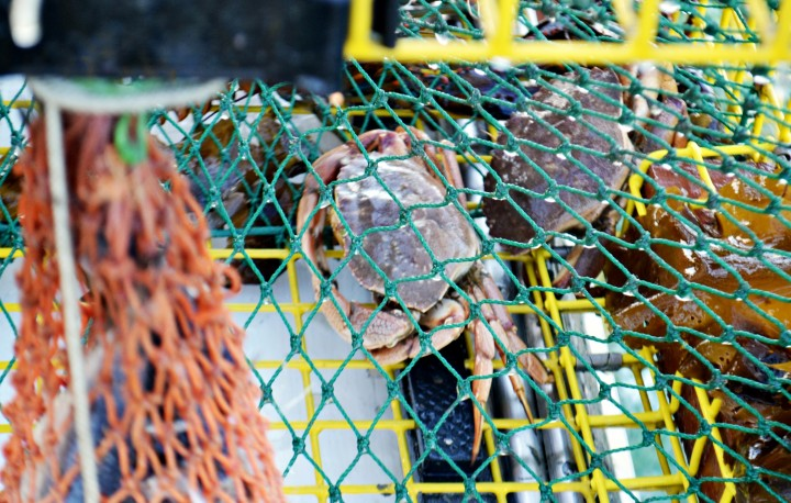 Maine Lobster Boat Tour | Things to Do in Portland, Maine - New England Today