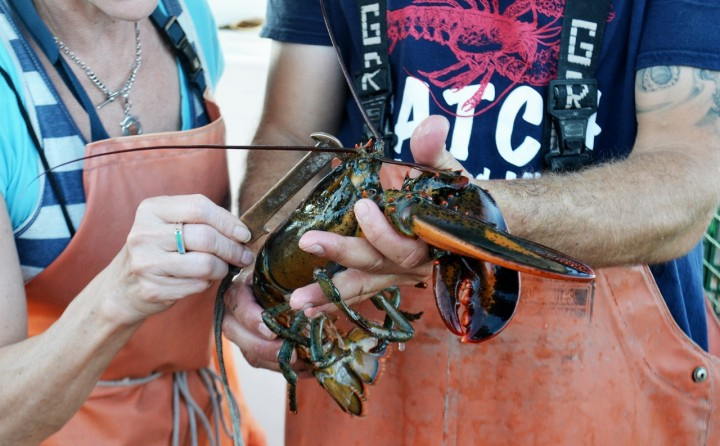 Maine Lobster Boat Tour   Things to Do in Portland, Maine - New England Today