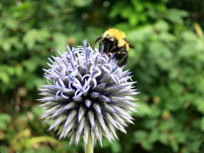 Para atraer a las abejas, ciertas flores dan jardín respaldo de sonido | Austin Casas