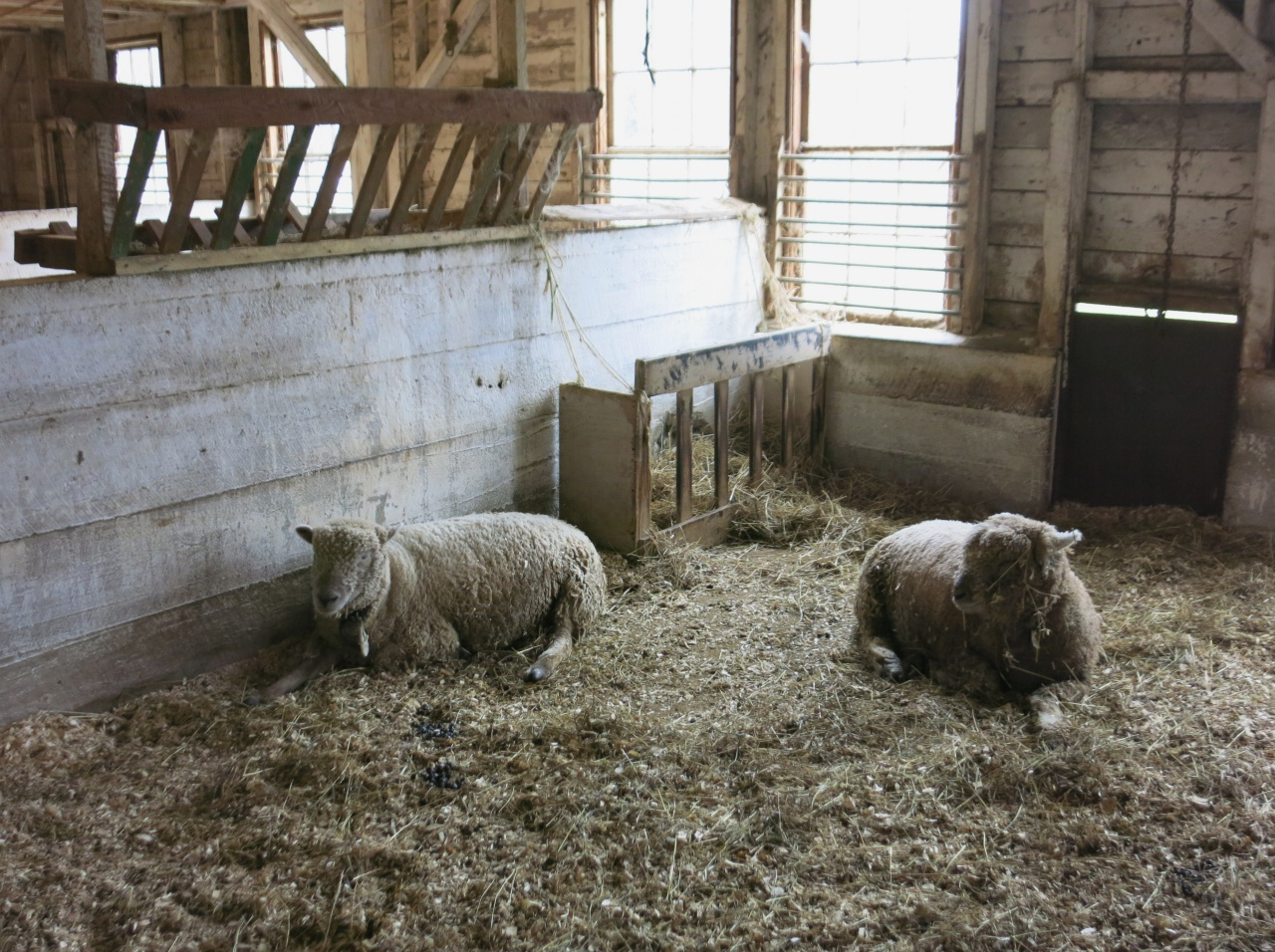 Best Sheep and Wool Festivals in New England - New England Today