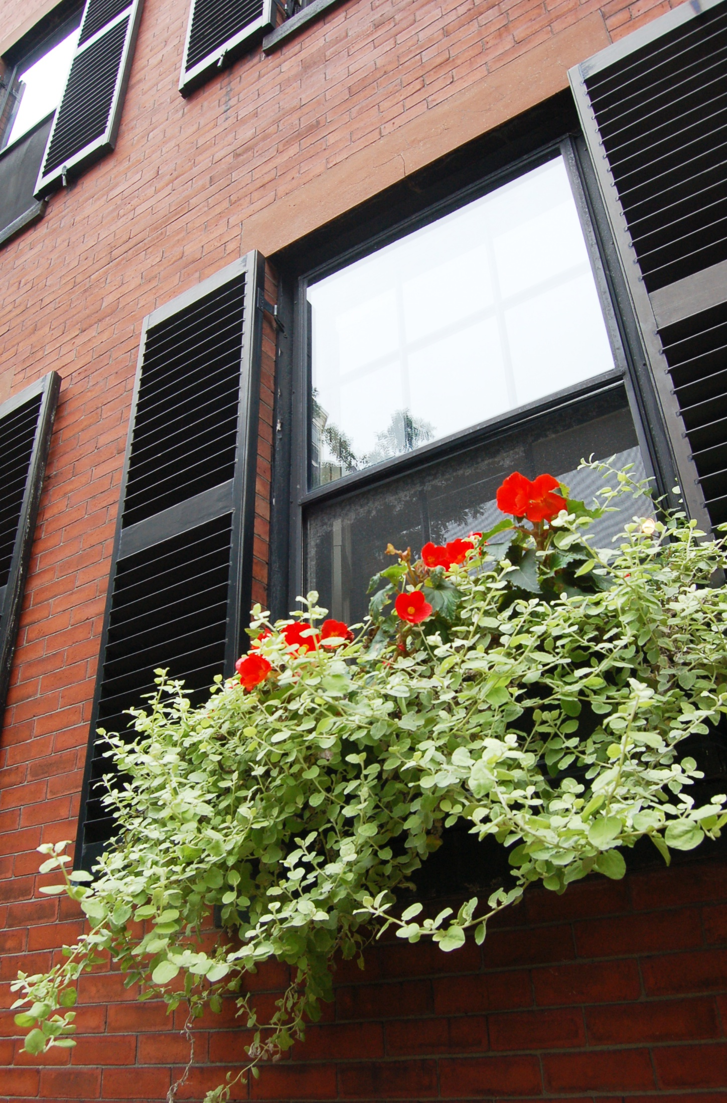 how to plant a window box window boxes window boxes tips and advice new england today