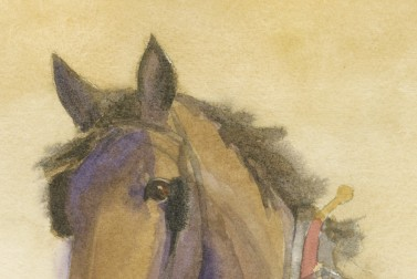 A Horse Named Danny