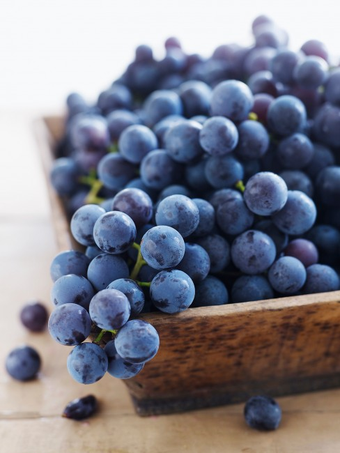 How To Plant Concord Grapes New England Today