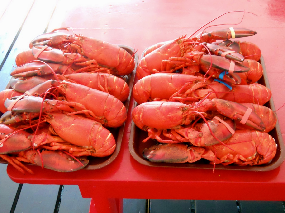 15 Best New England Lobster Shacks New England Today