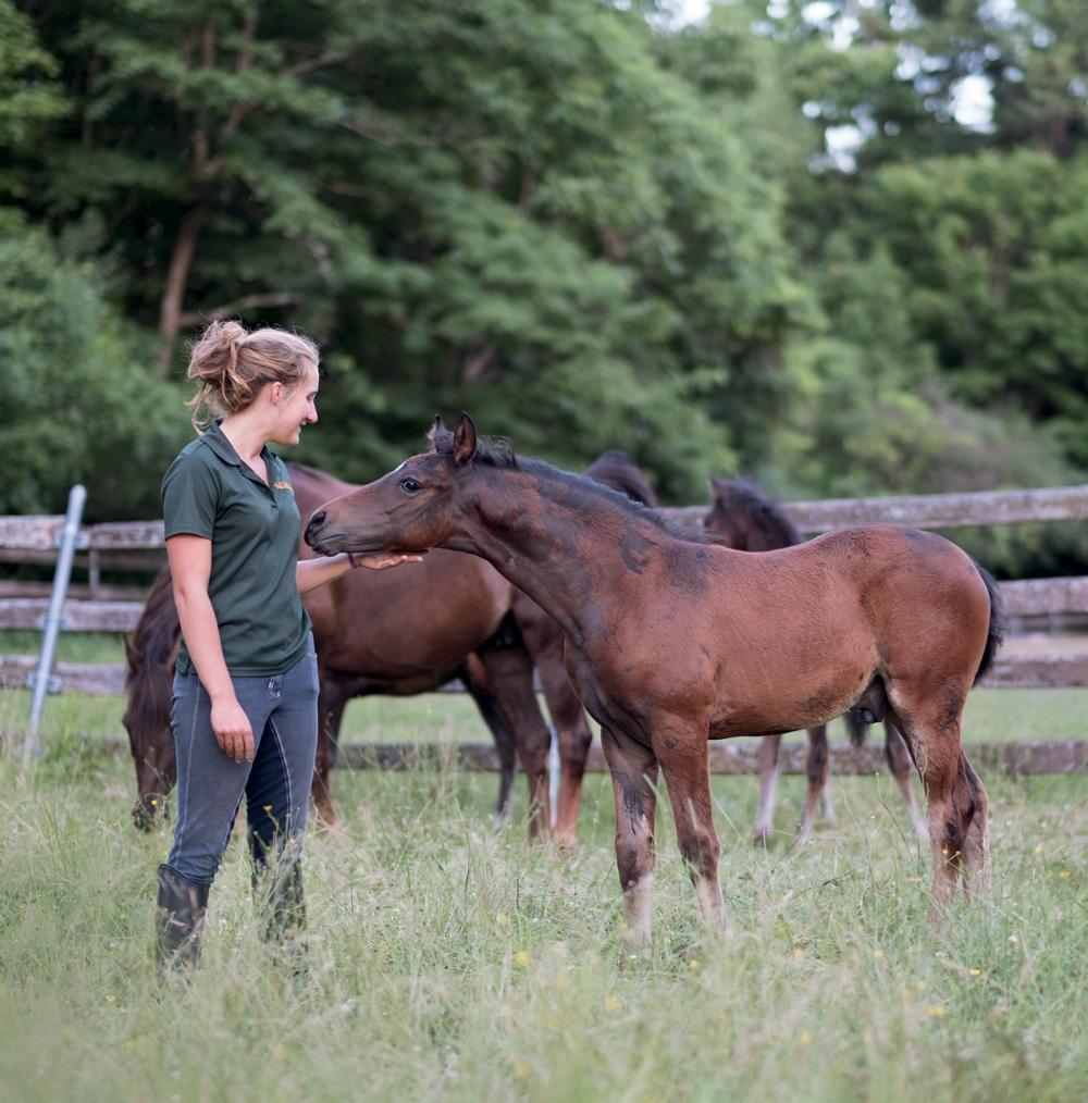 The University Of Vermonts Morgan Horse Farm The Horse