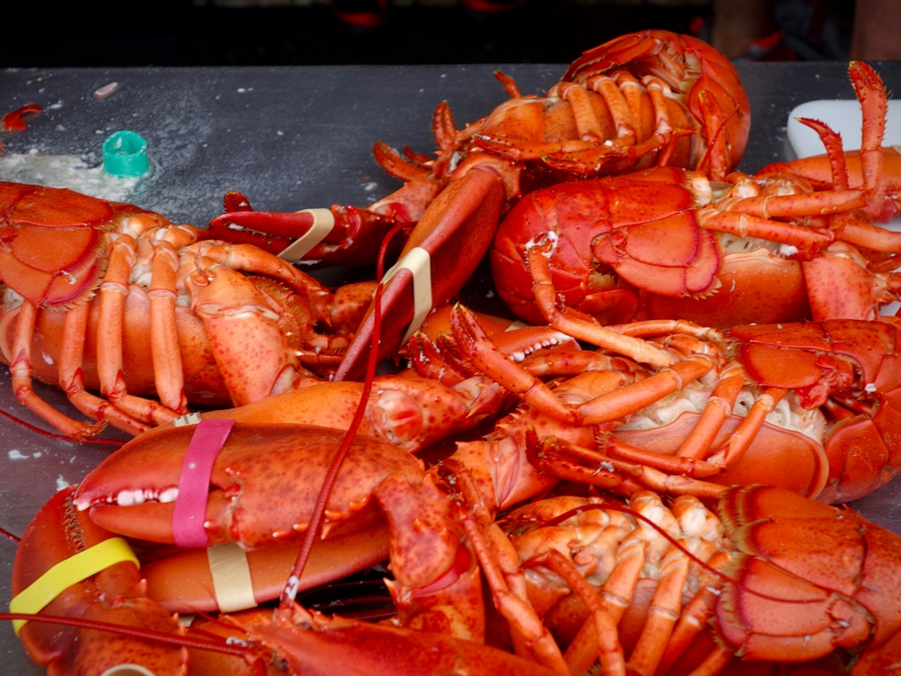 Best Summer Seafood Festivals in New England - New England Today