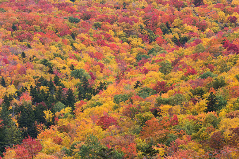 2017 new england fall foliage forecast new england today for When will the leaves start changing 2017