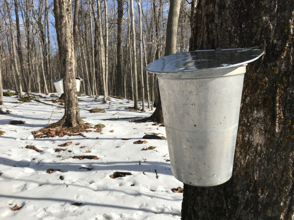 How To Make Maple Syrup In Your Own Backyard