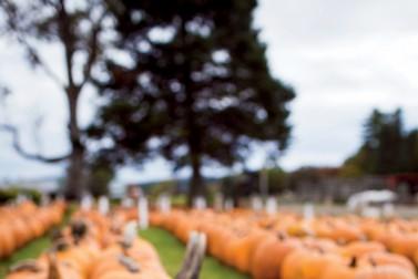 Ben's Pumpkins
