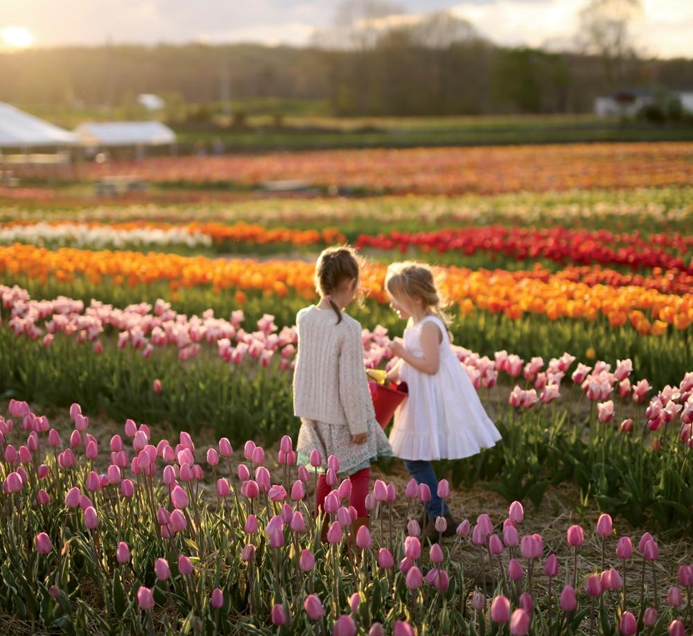 Spring at a Rhode Island Tulip Farm | Yankee Magazine