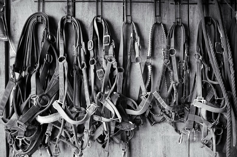 Halters hanging in the barn.