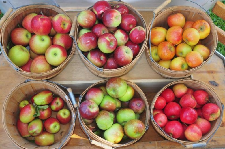 Best Apple Orchards in New England