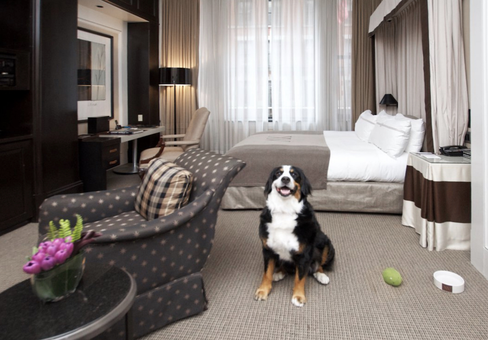 Top Dog-Friendly Hotels | Boston Lodging Guide - New ...