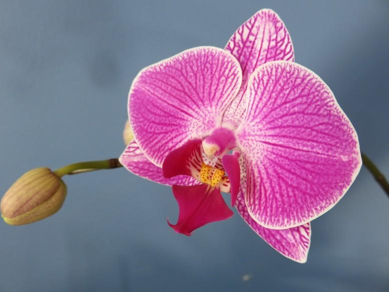 Best flowering indoor plants new england today best flowering indoor plants mightylinksfo