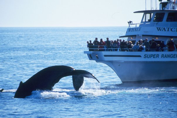 Boston Whale Watching Guide - New England Today