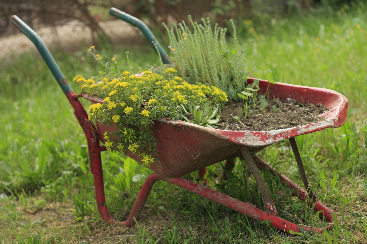 The Difference Between Soil And Dirt | Gardening Advice