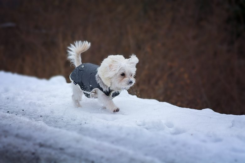 Ways New Englanders Embrace the Cold That Are Only Normal to Us