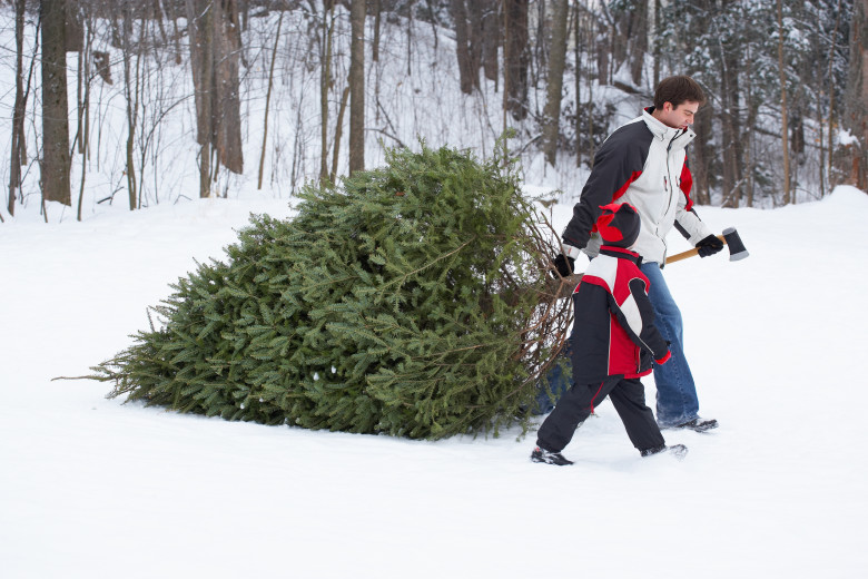 New England Christmas Tree Farms - Best New England Christmas Tree Farms In Every State