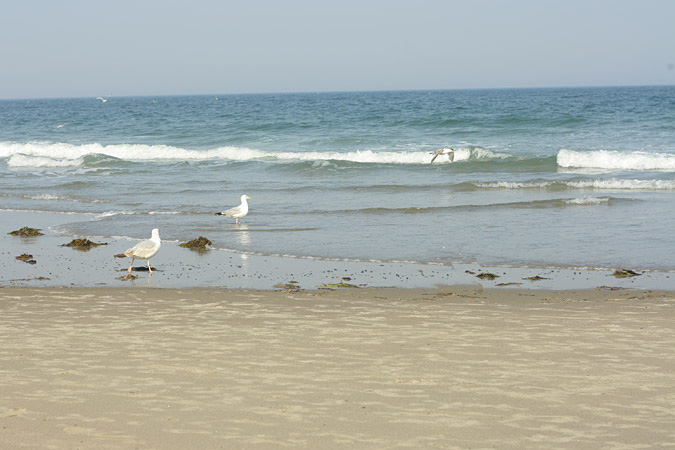 Hampton Beach Nh House Rentals