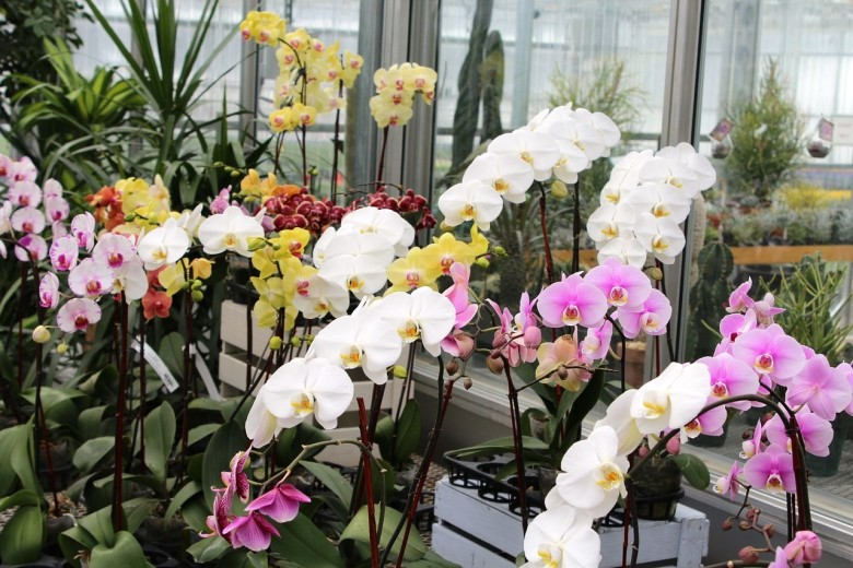 How To Care For Orchids And Help Them Bloom New England Today
