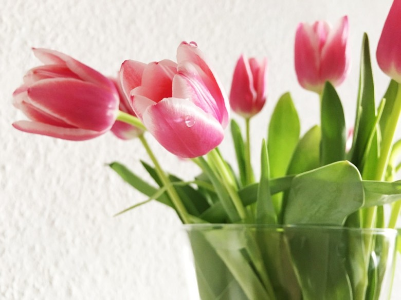 How To Care For Tulips New England Today