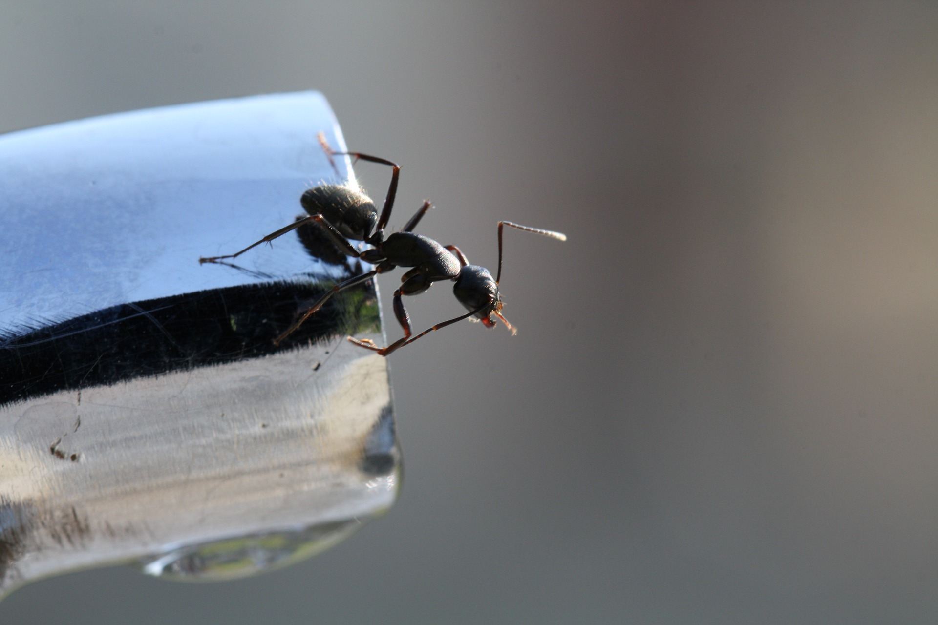 How to Get Rid of Ants in the House - New England Today